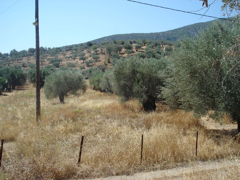 Picture of Land Plot - Lesvos - Gera - Fteli