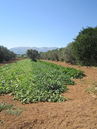 Picture of Land Plot - Chios Island - Agios Minas