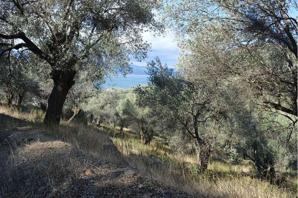 Picture of Land Plot - Lesvos - Mytilini - Alyfanta