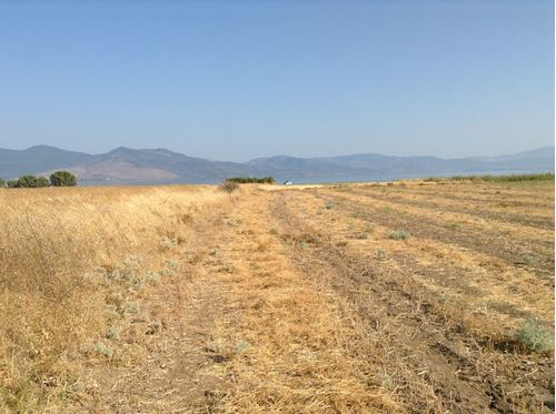 Picture of Land Plot - Lesvos - Polichnitos - Skamioudi